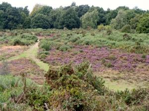 Purdis Heath