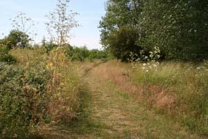 The Marston Vale Horse Riding Trail