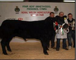 Anglesey Winter Show