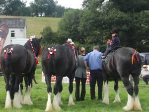 West Wales Shire Horse Show