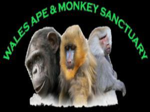 Wales Ape and Monkey Sanctuary