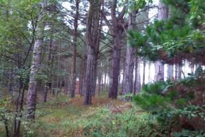 Newborough Forest