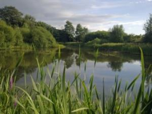 Severn Farm Pond