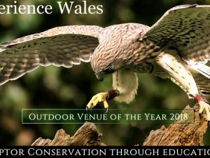 Falconry Experience Wales