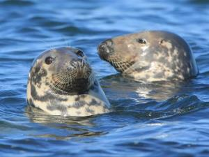 Cwmtydu Seals