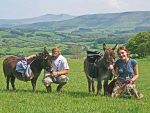 Mini Donkey Walks in the Brecon Beacons