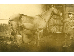 The Horses' Tail: Horses in WWI