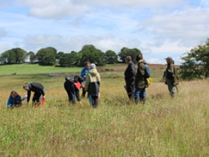 Visitors admiring Eycott Hill Meadows