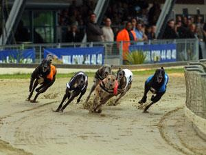 Group Visits to Greyhound Racing