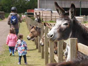 Donkeys at Redwings
