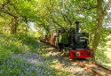 Steaming through the Bluebells