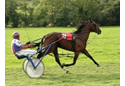 Lampeter harness races 2014