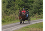 Carriage driving at Dyfnant Forest