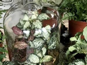 Closed-Terrarium Workshop with Geo Fleur