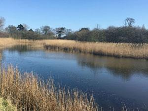 Great Yarmouth to Mautby Walk