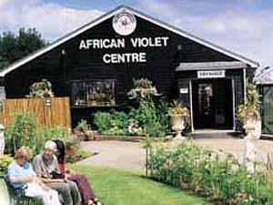 The African Violet Centre