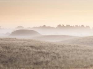 Mist over the Royal Burial Ground, by Justin Minns