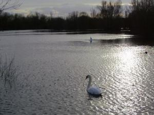 Chigborough Lakes