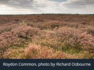 Roydon Common