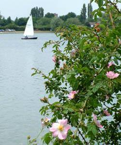 Priory Country Park - a place to unwind