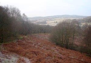 Coed Crafnant Reserve
