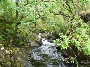 Coed Ganllwyd Nature Reserve