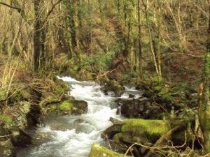 Aber Corris Nature Reserve