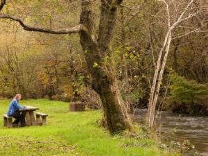 Foel Friog picnic site Dyfi Forest