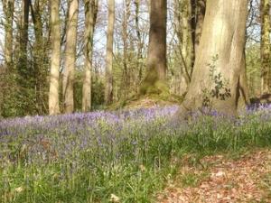 Whitestone Woods