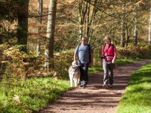 Coed Moel Famau woodland walk