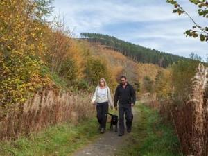 Walkers at Coed Llangwyfan