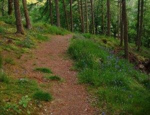 Ystwyth Forest