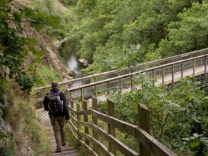 Miners Bridge at Maenarthur Woods