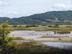 RSPB Dyfi Nature Reserve