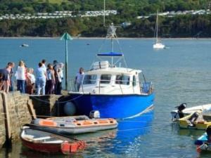 Dolphin Survey Boat Trips
