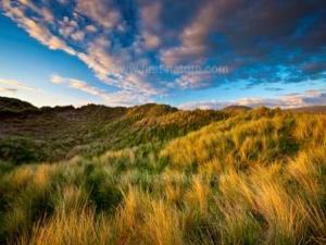Morfa Dyffryn Nature Reserve