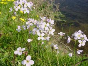 Cors Y Llyn Nature Reserve