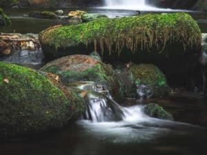 Dolgoch Falls Pool