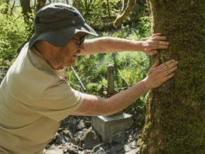Celtic Rainforest Experience