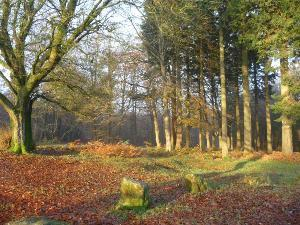 Wentwood