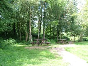 Goytre Hall Wood