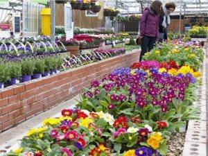 Raglan Garden Centre