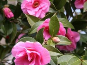 Llanover Spring Flowers