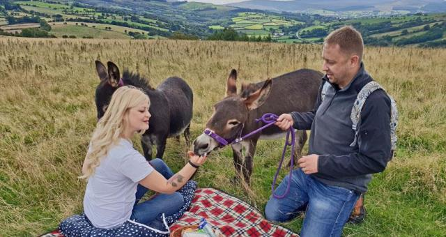 Mini Donkey walk and picnic in Wales