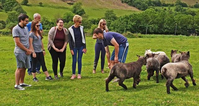 Team building with Sheepdog training sessions