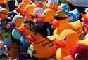 Annual Charity Duck Races