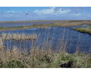NWT Cley Marshes