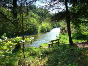 Bench overlooking the River Ystwyth