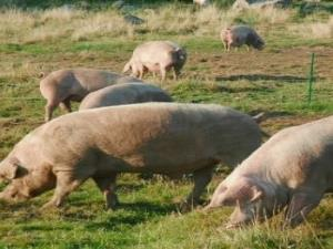 Glamorgan Vale Welsh Pork