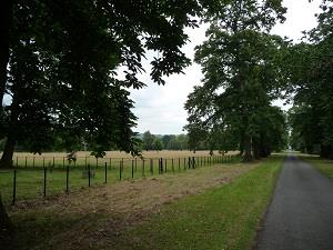 Avenue of trees, Llanover Park (photo-Chris Brown)